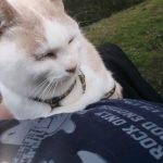 【猫とキャンプ】ねこキャン△secondseason【お肉を食べる】