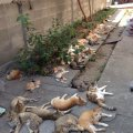 トラフ地震がくる 鳥の様子がおかしい 神奈川県